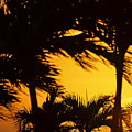 Saint Martin Sunset Through The Palm Trees by Toby McGuire