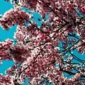 Sakura by Juergen Weiss