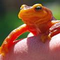 Salamander by Kevin B Bohner