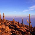 Salar De Uyuni And Cacti At Sunrise by James Brunker