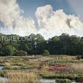 Salicornia 0725 by Captain Debbie Ritter