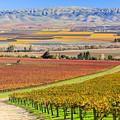 Salinas Valley by Chon Kit Leong