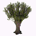 Salix Viminalis Tree by Corey Ford