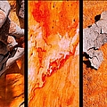 Salmon Gum Tree Triptych  #3 by Lexa Harpell