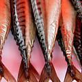 Salmon Market Bergen by KG Thienemann