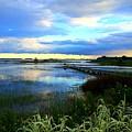 Salt Marsh by Shelia Kempf