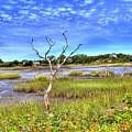 Salt Marsh by Tammy Wetzel