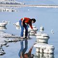 Salt Pillars In Dead Sea by Carl Purcell