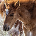 Salt River Sleepy Foal by Belinda Greb
