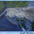 Salt Water Ballet - Manatees - 2 by Anthony J Padgett