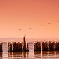 Salton Sea by John Malmquist