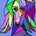 Saluki Colors by Terry Chacon