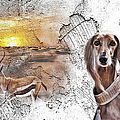 Saluki - The One And Only by Maria Astedt