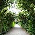 Salzburg Garden Arbor by Carol Groenen