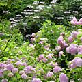 Pink Hydrangeas In Mirabell Garden by Carol Groenen