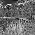 Sam Houston Jones State Park Bridge Bw by Judy Vincent