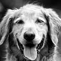 Sam Smiling by Julie Niemela