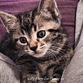 Sam  The Kitten by MaryLee Parker
