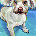 Sam The Maltese Mix by Robert Phelps