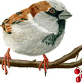 Sammy Sparrow by Rich Stedman