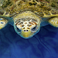 Sammy The Sea Turtle by Karen Wiles