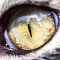 Sammy's Eye by Claudius Cazan