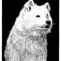 Samoyed Dog by Dan Pearce