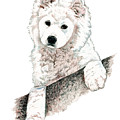 Samoyed Puppy by Kathleen Sepulveda