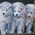 Samoyed Pups by Lee Ann Shepard