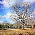 Sam's Tree by Kristin Elmquist