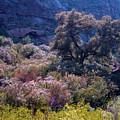 San Diego County Canyon by Alan Thwaites
