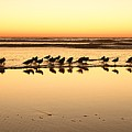 San Diego Shorebirds by John F Tsumas