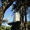 San Francisco Windmills by Joy Patzner