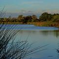 San Joaquin Wildlife Sanctuary by Richard Stephen