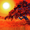 San Mateo Oak In Bright Sunset by Laura Iverson