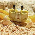 Sand Crab by John Hughes