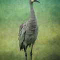 Sand Crane by Tim Wemple