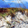 Sand Dune And Sea Oats by Thomas R Fletcher