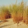 Sand Dune I - Jersey Shore by Angie Tirado