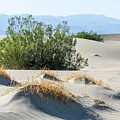 Sand Dunes, Plants, Mountains by Patti Deters