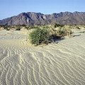 Sand Dunes & San Ysidro Mountains At El by Rich Reid