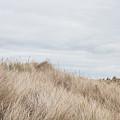 Sand Dunes by Tom Gowanlock