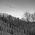 Dune Fences - Grayscale by Brian Wallace