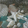 Sand, Shells, And Sea Glass 9870 by Teresa Wilson