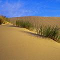 Sand Tracks by Robert Potts