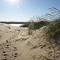 Sand Tracks by Tara Lynn