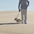 Sand Walk by Tara Lynn