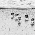 Sanderling Sprint 2 Delray Beach Florida by Lawrence S Richardson Jr
