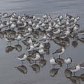 Sanderlings On The Shore by Kris Hiemstra