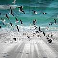 Sandestin Seagulls C by Roe Rader